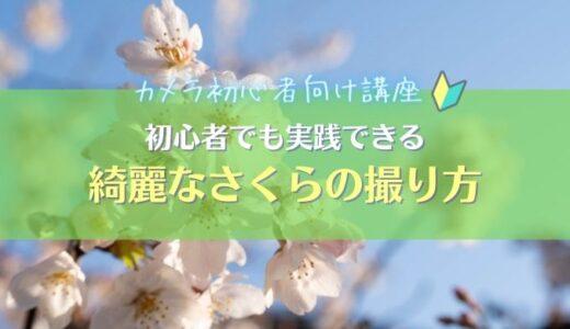 【桜(さくら)写真の撮り方】初心者でも真似できる5つ撮影方法を紹介