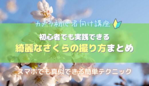 桜写真の撮り方|初心者でも再現できる5つの撮影テクニックを紹介します